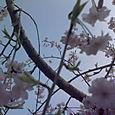 Flower_dimension