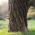 Bright_tree