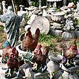 Jesus_leading_the_chickens_at_the_azalea