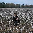 i'd never seen a cotton field before,
