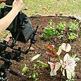 Lu shooting the garden