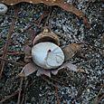 Fungus flower